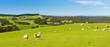 Sheep - 70973104