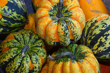 Green and orange hybrid autumn pumpkins