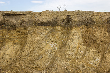 Cross section of dirt