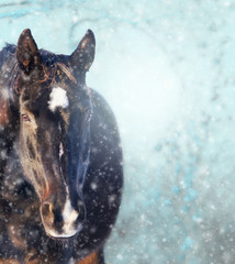 Horse in snowfall on winter background