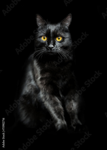 canvas print picture black cat on black