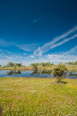 Pastures and pond. Extremadura, Spain. Oak trees and blue sky