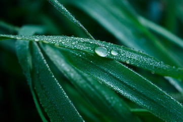 A Blade of Grass and Water Droplets