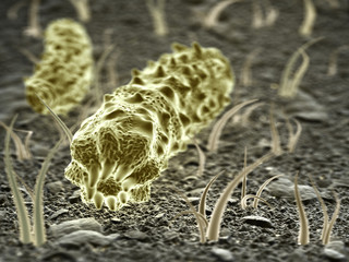 Fantasy Microbes or bacteria or virus.  Science 3d illustration