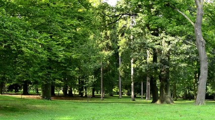 panorama of park (trees) - sunny - grass