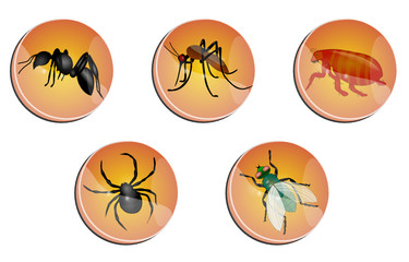boutons insectes