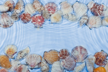 Line of sea shells in the water