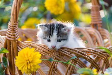 Cute  kitten sitting in a basket on  floral lawn