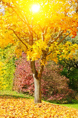 Bright colorful maple leaf in fall