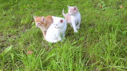 adorable tabby kittens outdoors