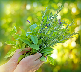 Fresh herbs - spices in hands