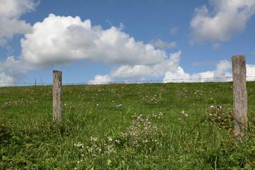 Prairie clôturée pour les troupeaux.