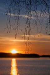 Birch branches silhouette, sunset on the Saimaa lake in Finland