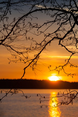 Branches silhouette above the sunset on the Saimaa lake in Finla