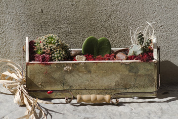 succulent plant in the box