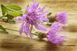 canvas print picture - Centaurea cyanus Cornflower Fiordaliso Bleuet des champes