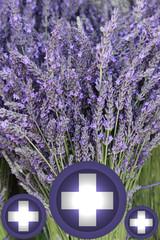 Aromathérapie - Lavande - Soins par les Plantes