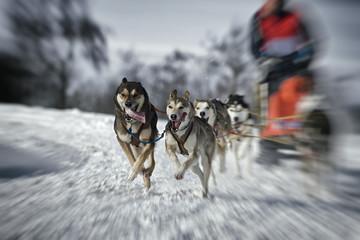 Hundeschlittenrennen Zoombewegung