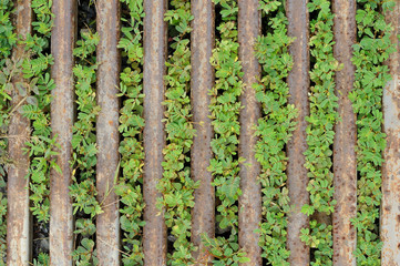 Green weeds and rusting steel bar
