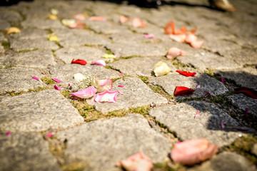 Rosenblätter auf dem Boden