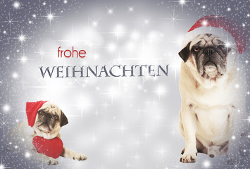 two dogs frohe weihnachten
