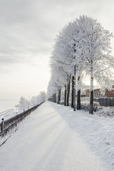 Winter cityscape with snow covered trees