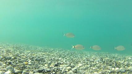 Diving Underwater footage Shot in Montenegro, Adriatic sea