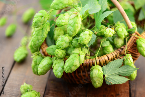 canvas print picture Hopfen
