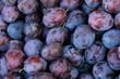 Plum harvest - 71008722
