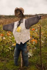 Scarecrow guarding his Pumpkins