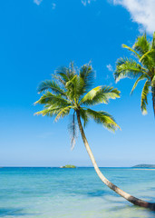 Exotic Paradise Coconut Coast