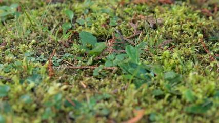mushroom in forest litter
