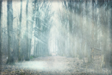 mystical forest fog © kichigin19