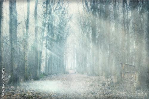 Aluminium Bossen mystical forest fog