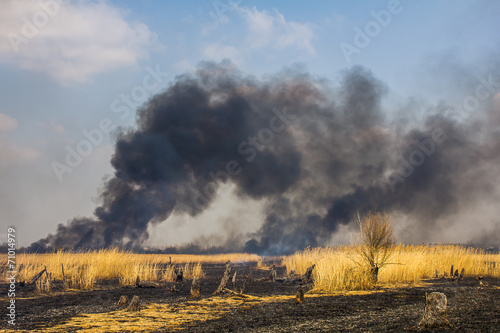 Wildfire in the field with dry grass