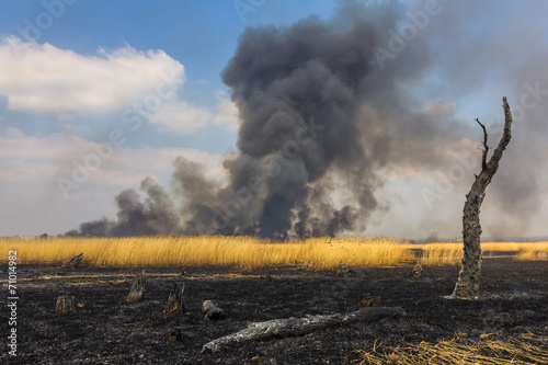 Wildfire in the field with dry grass with a burned trees on a fo