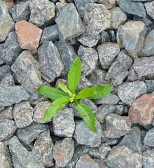 Seedling desert. Plants.