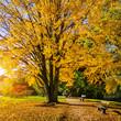 Beautiful autumn scene in park at sunrise