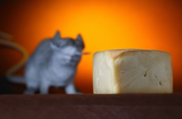 Piece Of Cheese And Rat In Background