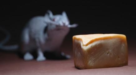 Piece Of Cheese With Rodent In Background