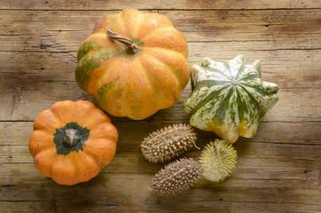 Cucurbita Pumpkin Zucca Calabaza Citrouille Тыква плод