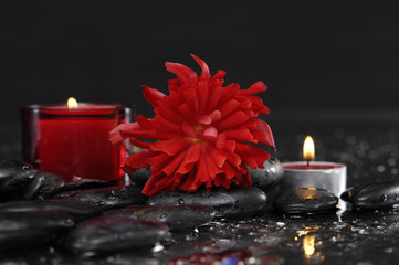 still life with pebbles and red ranunculusf flower,candle