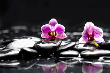 Still life with Two orchid and candle on pebbles