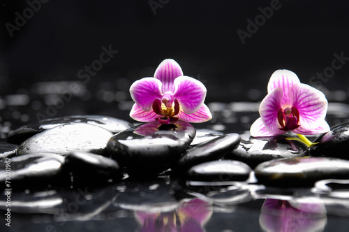 Poster Spa Still life with Two orchid and candle on pebbles