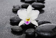 spa concept –white orchid with black stones
