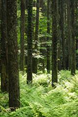 雑木林 千葉
