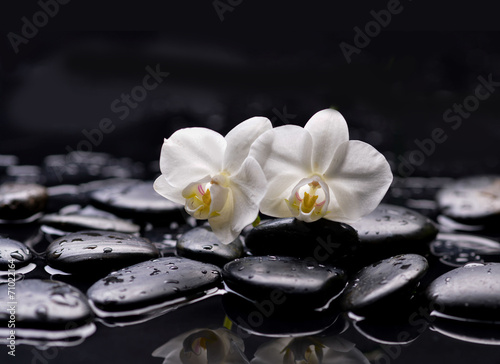 Set of two white orchid with therapy stones
