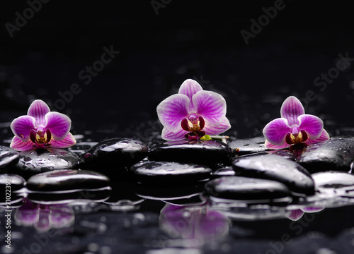 Poster Spa still life with black stone and three orchid