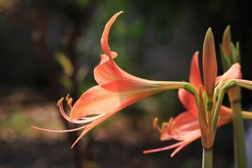 pollen of orange flower