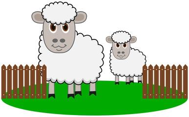 an organic sheep farming